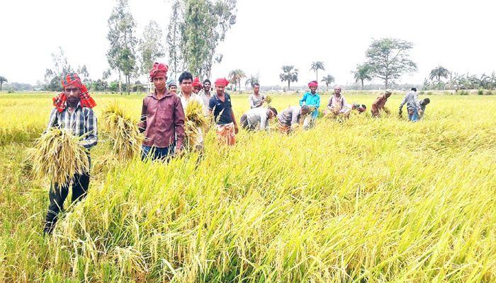 আজ নবান্ন: গ্রামগুলোতে উৎসবের আমেজ