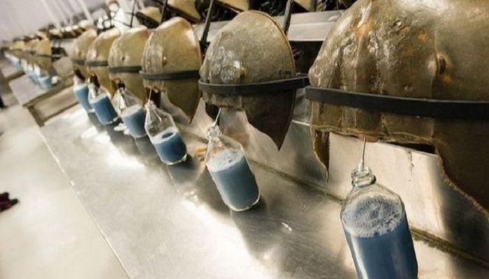 করোনার টিকায় দরকার কাঁকড়ার নীল রক্ত