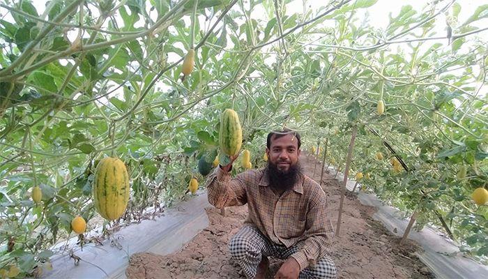 ঝিনাইদহে হলুদ রংয়ের তরমুজ চাষে সফল হয়েছেন রশিদ। ছবি: ঝিনাইদহ প্রতিনিধি