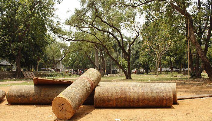 ইতিমধ্যে সোহরাওয়ার্দী উদ্যানের অনেকগুলো অর্ধশত বছর বয়সী গাছ কাটা হয়েছে। ছবি : স্টার মেইল